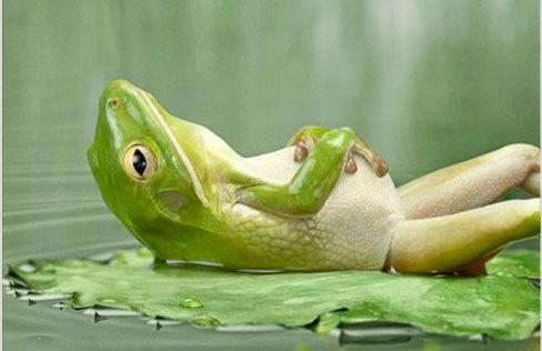 frog-sleeping